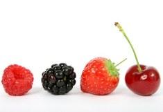 berry-12snacks