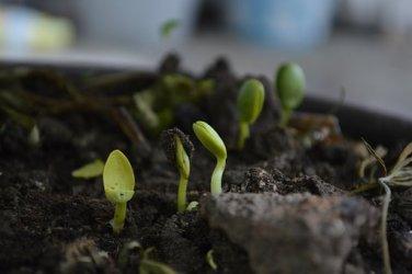 grown-up-plantas